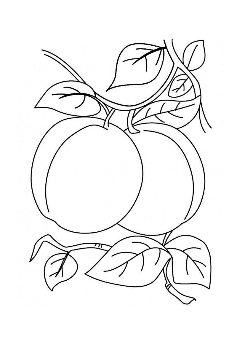 Картинка для раскраски «Абрикосы»