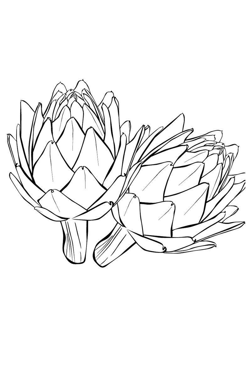 Артишоки - Картинка для раскрашивания красками-гуашью