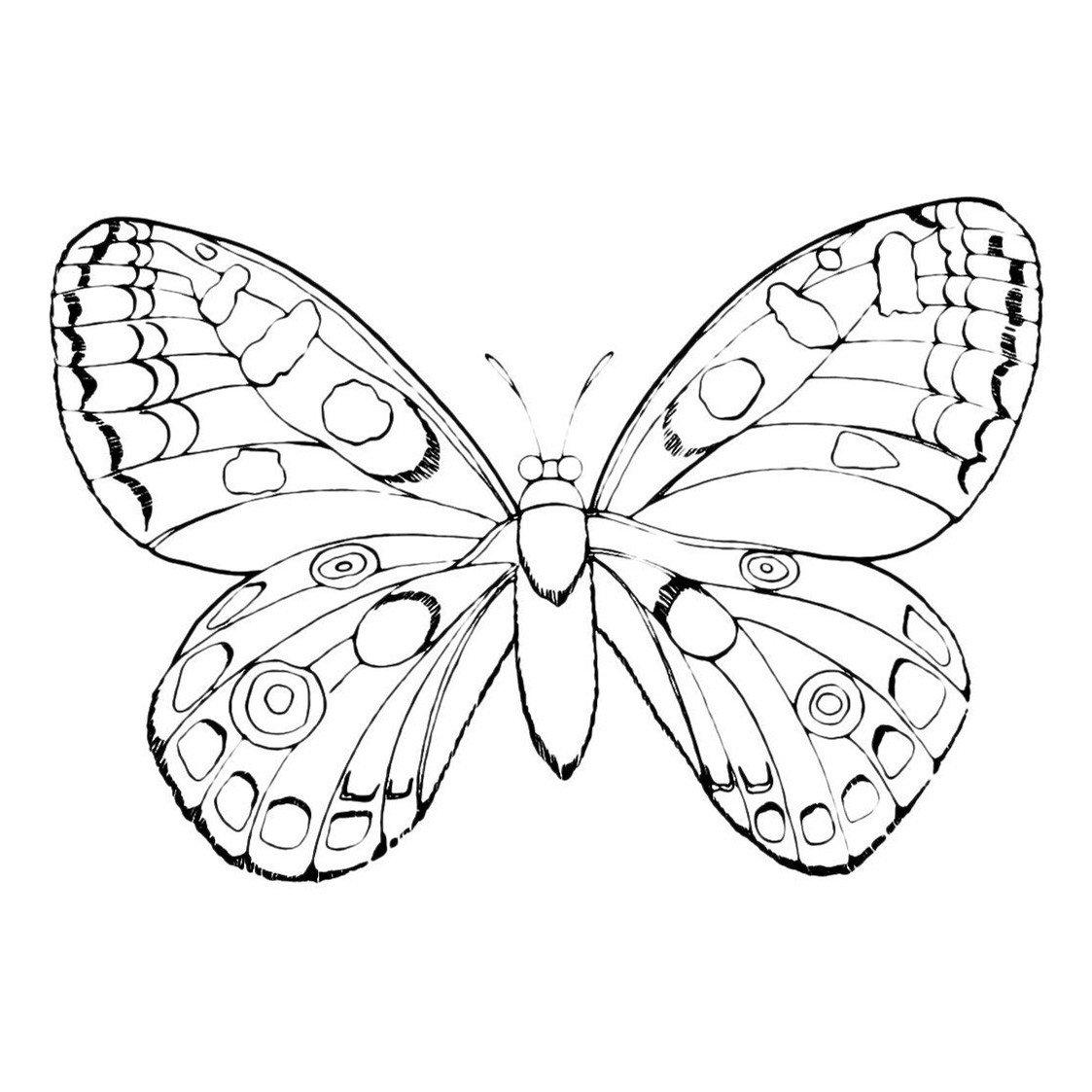 Бабочка в капельку - Картинка для раскрашивания красками-гуашью