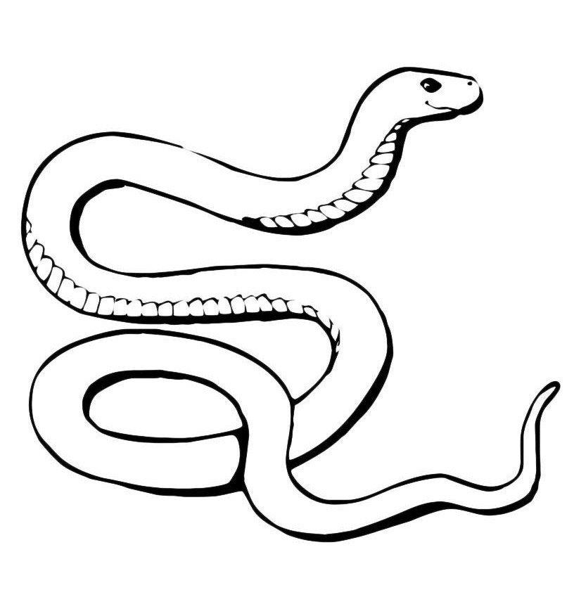 Добрая змея - Картинка для раскрашивания красками-гуашью