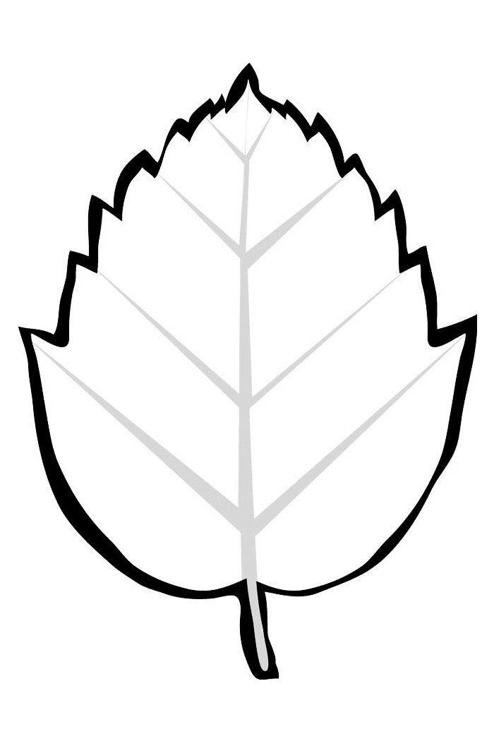 Картинка для раскраски «Гамамелис»