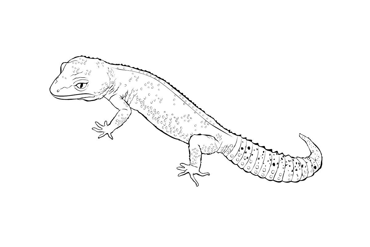 Геккон - Картинка для раскрашивания красками-гуашью