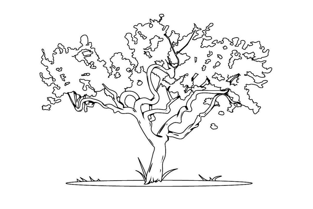 Карликовое дерево - Картинка для раскрашивания красками-гуашью