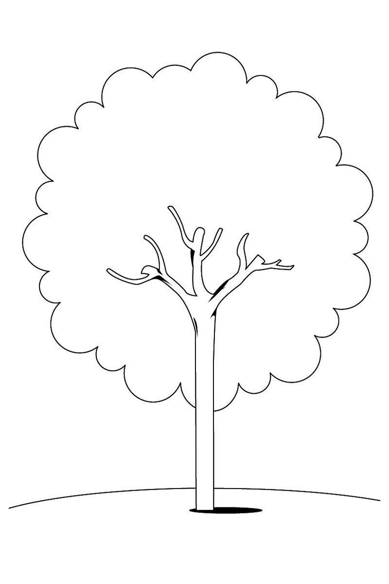 Каштан - Картинка для раскрашивания красками-гуашью