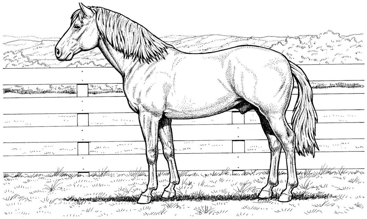 Конь - Картинка для раскрашивания красками-гуашью