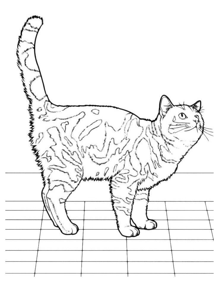 Кошка на кухне ждет обеда - Картинка для раскрашивания красками-гуашью