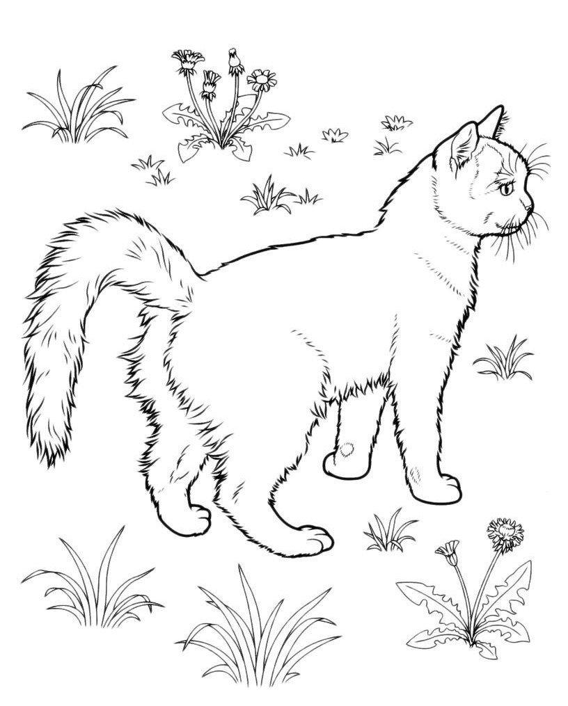 Картинка для раскраски «Кошка на лужайке»