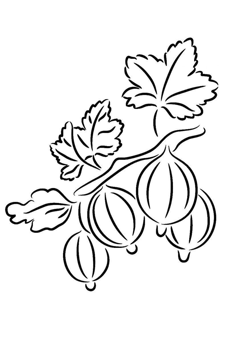 Крыжовник - Картинка для раскрашивания красками-гуашью