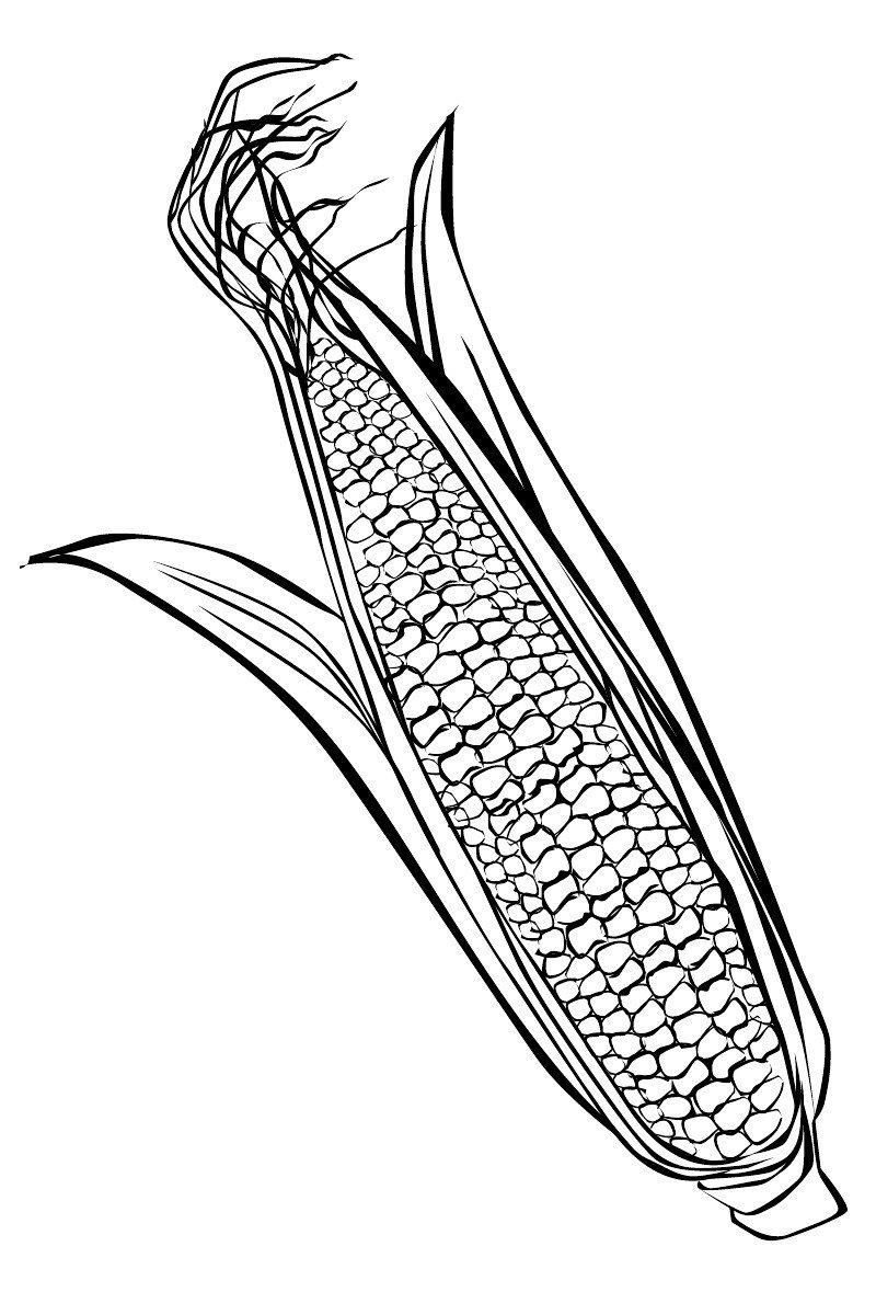 Кукуруза - Картинка для раскрашивания красками-гуашью