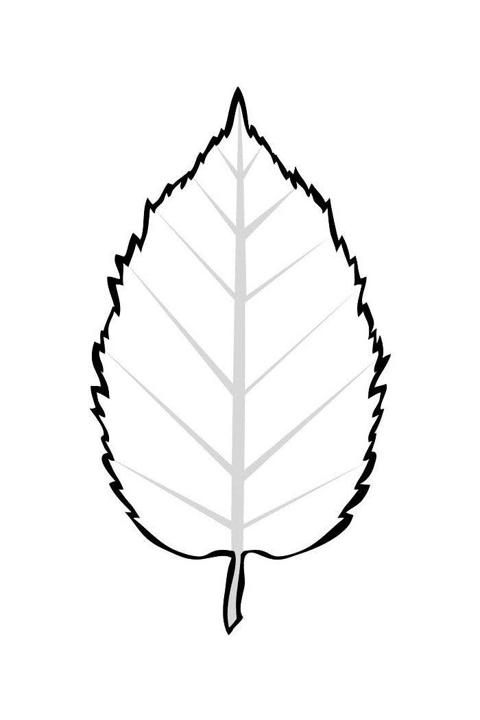 Лист ольхи - Картинка для раскрашивания красками-гуашью