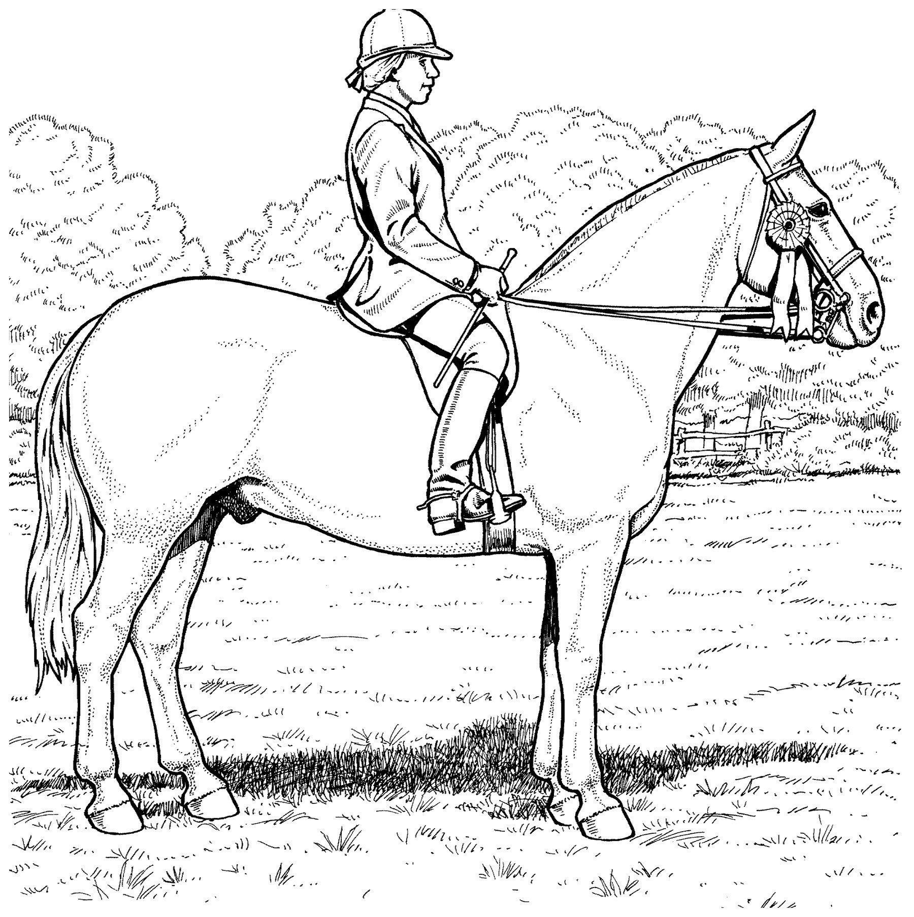 Картинка для раскраски «Лошадь с наездником»