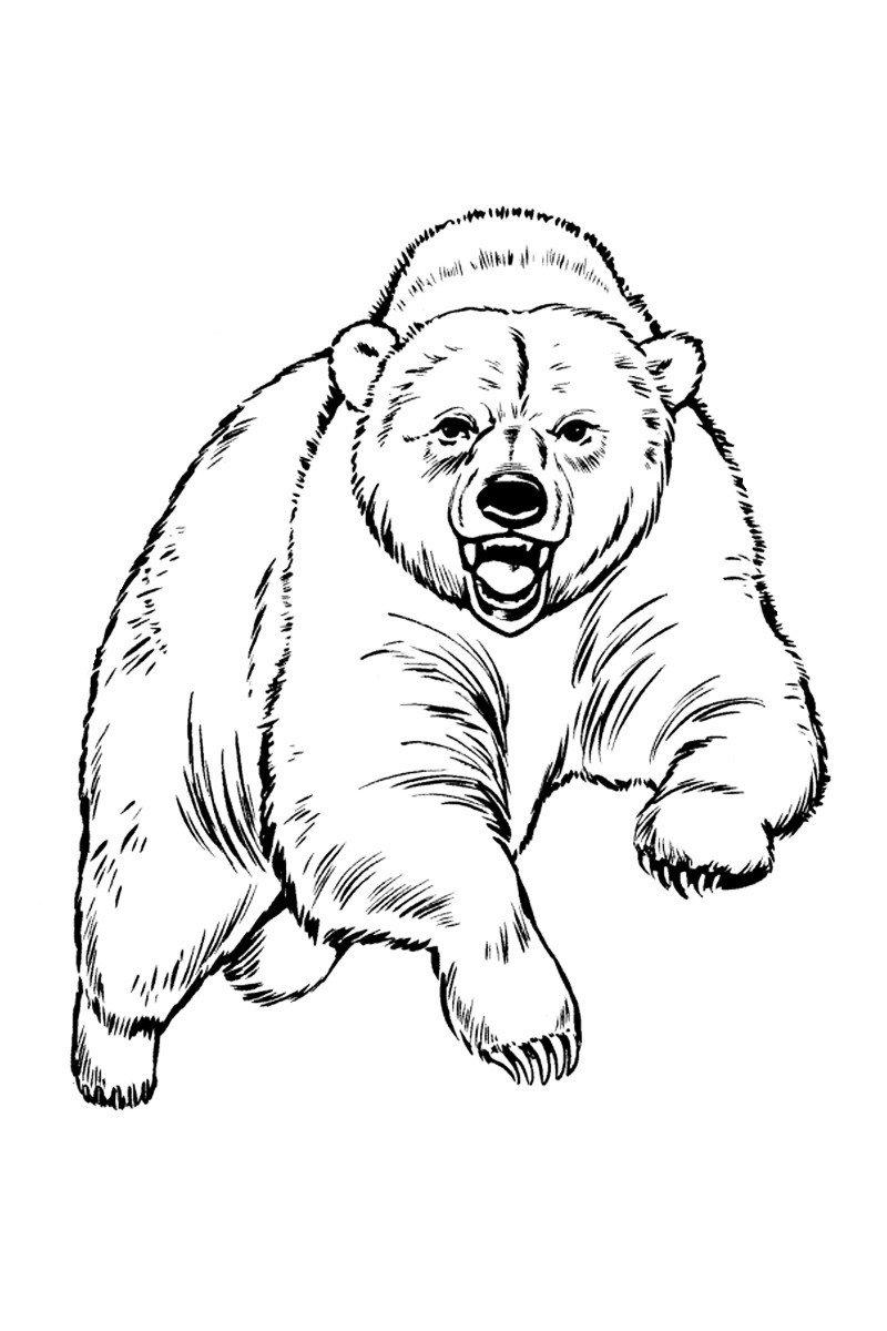 Медведь - Картинка для раскрашивания красками-гуашью