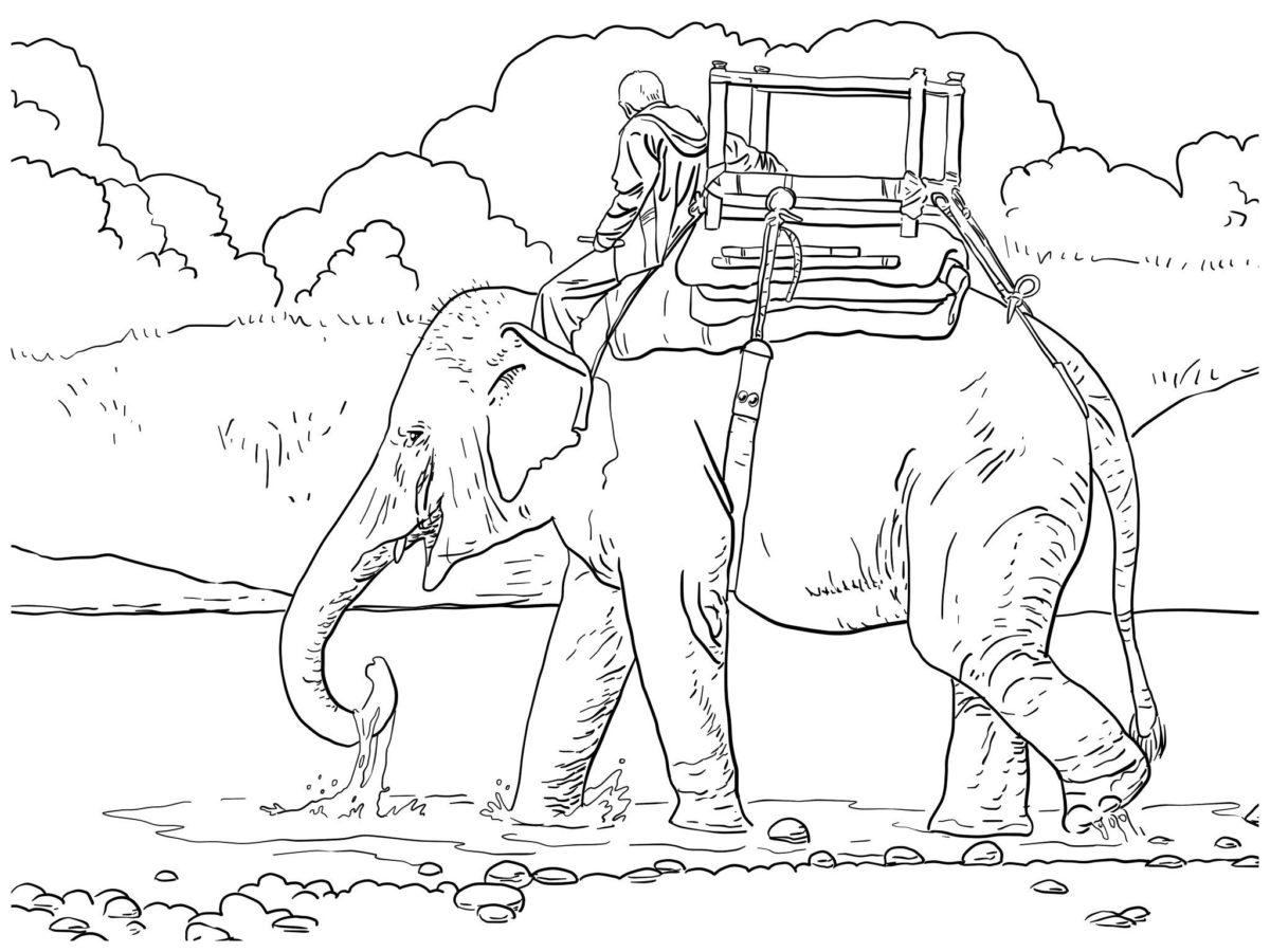 Наездник на слоне - Картинка для раскрашивания красками-гуашью