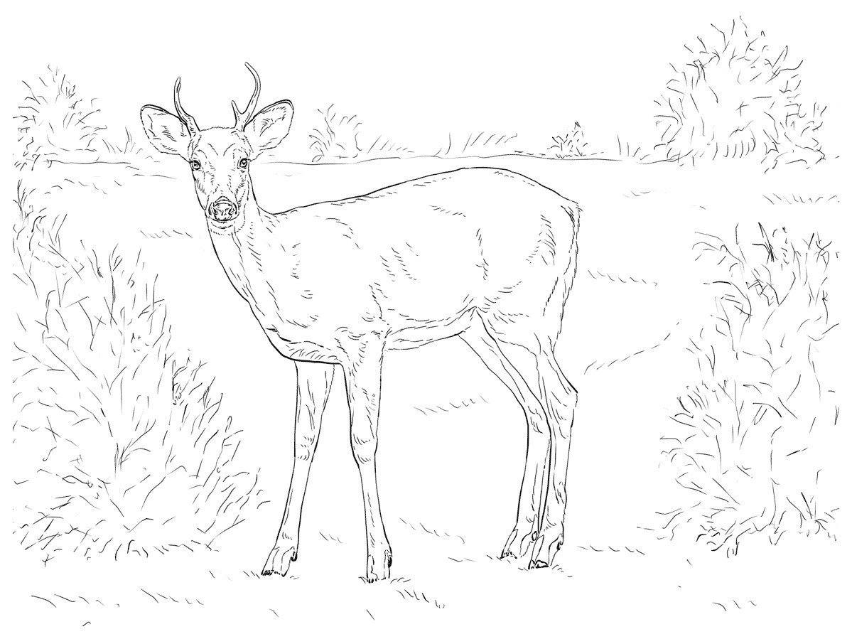 Олень на поляне - Картинка для раскрашивания красками-гуашью