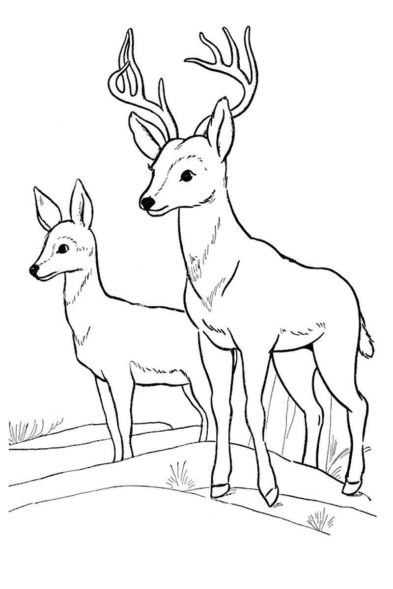 Олени - Картинка для раскрашивания красками-гуашью