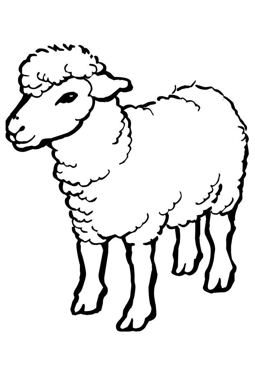 Овца - Картинка для раскрашивания красками-гуашью