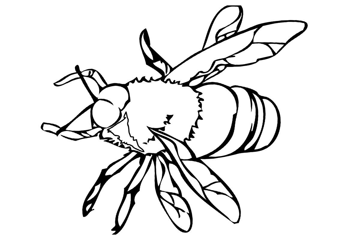 Пчела - Картинка для раскрашивания красками-гуашью