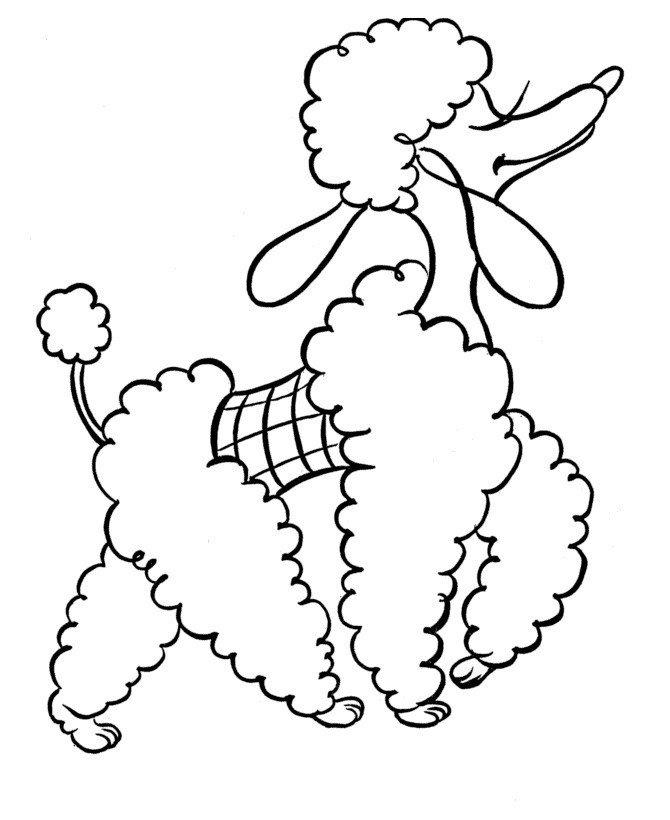 Картинка для раскраски «Пудель»