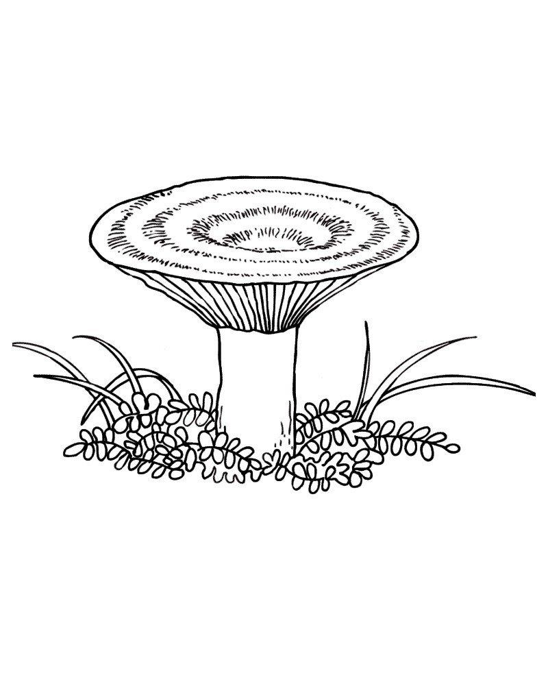 Сыроежка - Картинка для раскрашивания красками-гуашью