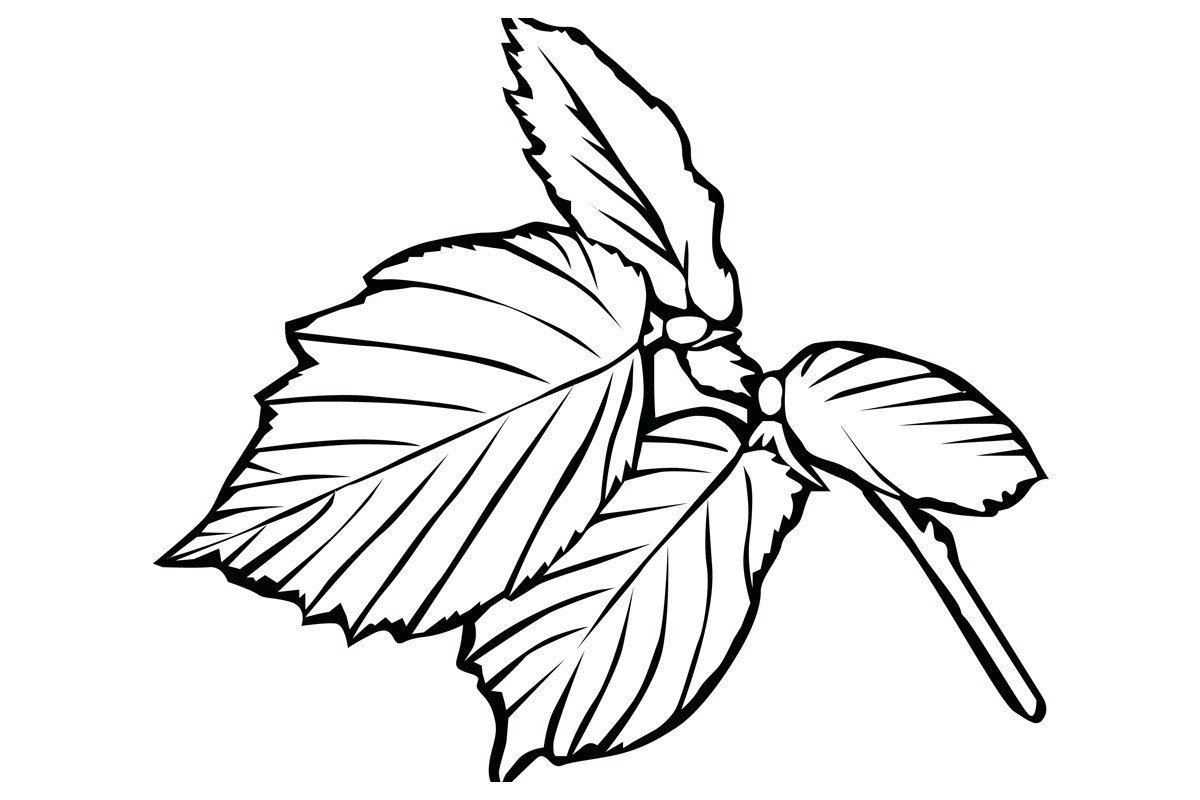 Царский лист - Картинка для раскрашивания красками-гуашью