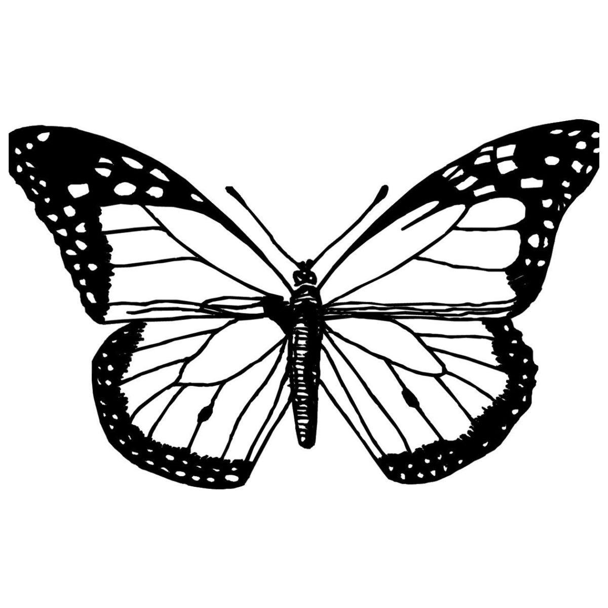 Уставшая бабочка - Картинка для раскрашивания красками-гуашью