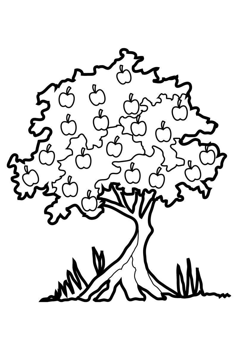 Яблоня - Картинка для раскрашивания красками-гуашью