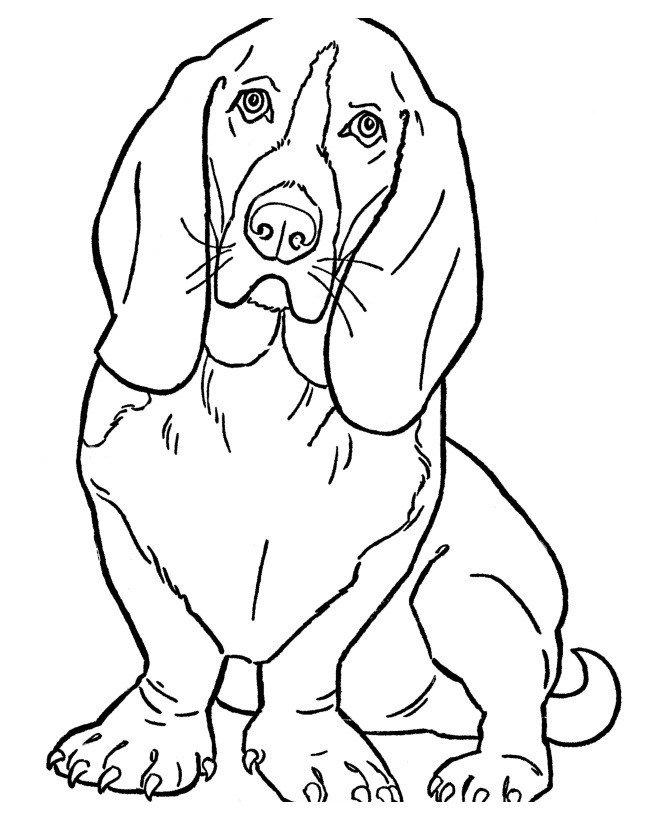 Картинка для раскраски «Задумчивый пёс»