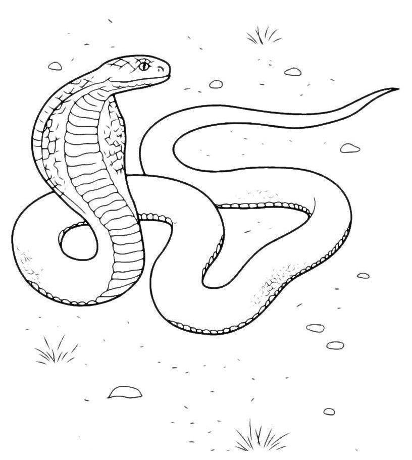 Змея насторожилась - Картинка для раскрашивания красками-гуашью
